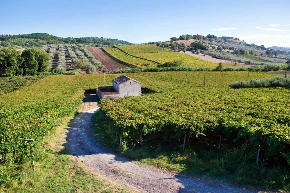 Italiaanse wijn - Abruzzo