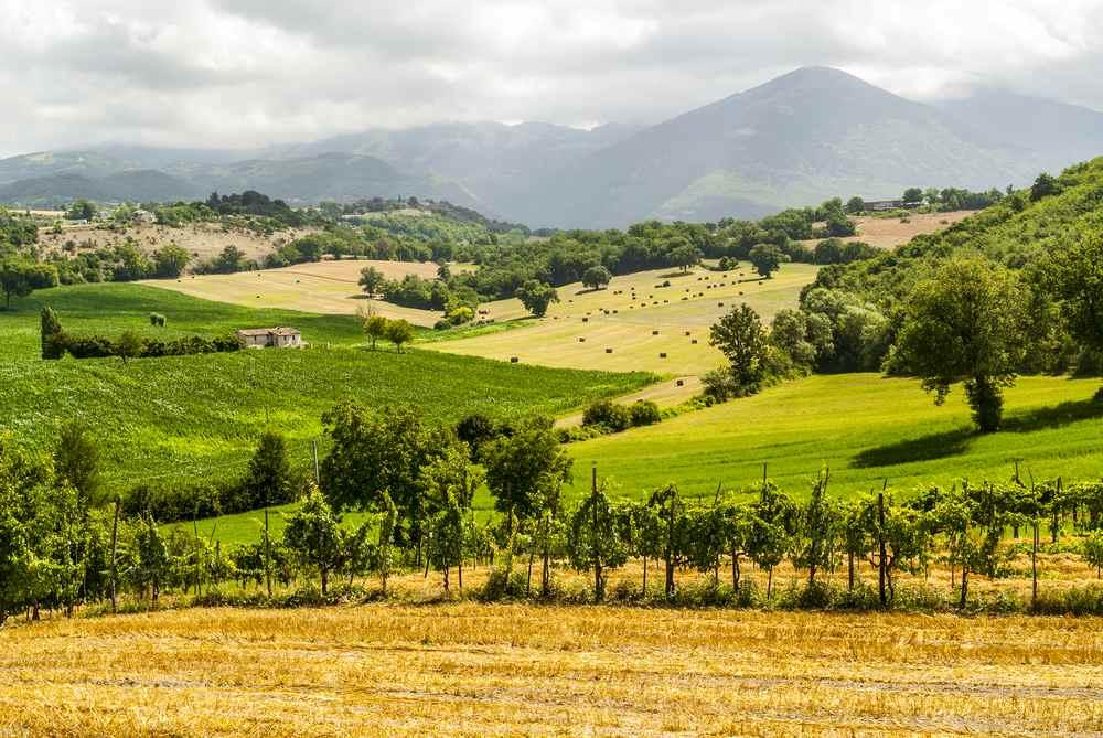 Italiaanse wijn - Lazio