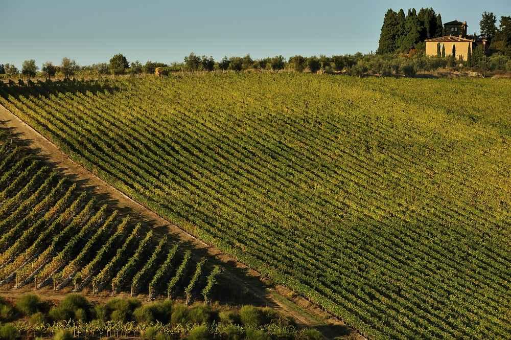 Italiaanse wijn - Toscane