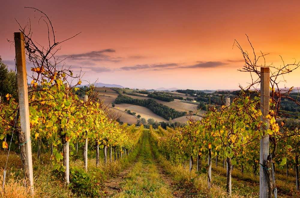 Italiaanse wijn - Umbria