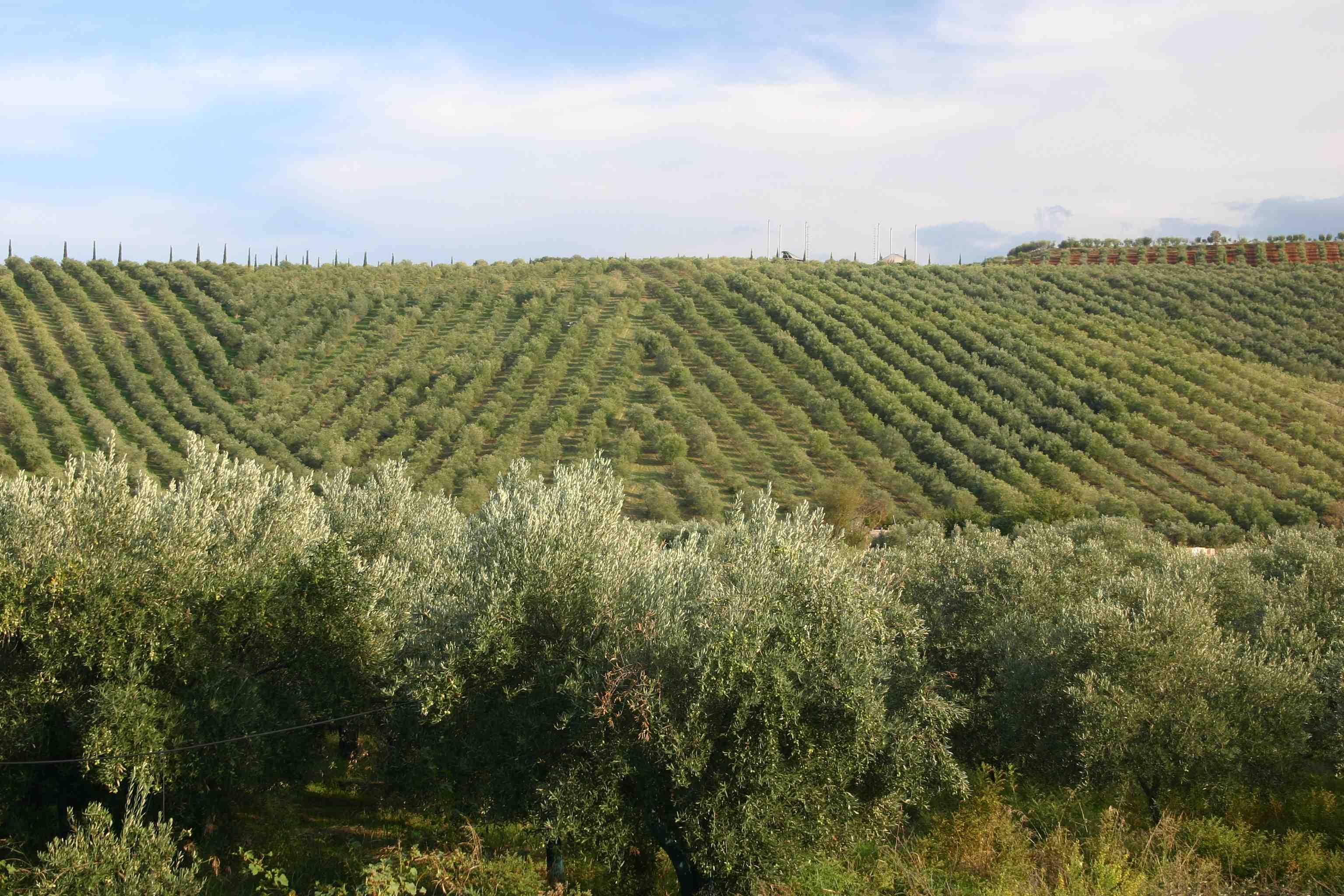 Italiaanse wijnen - Calabria