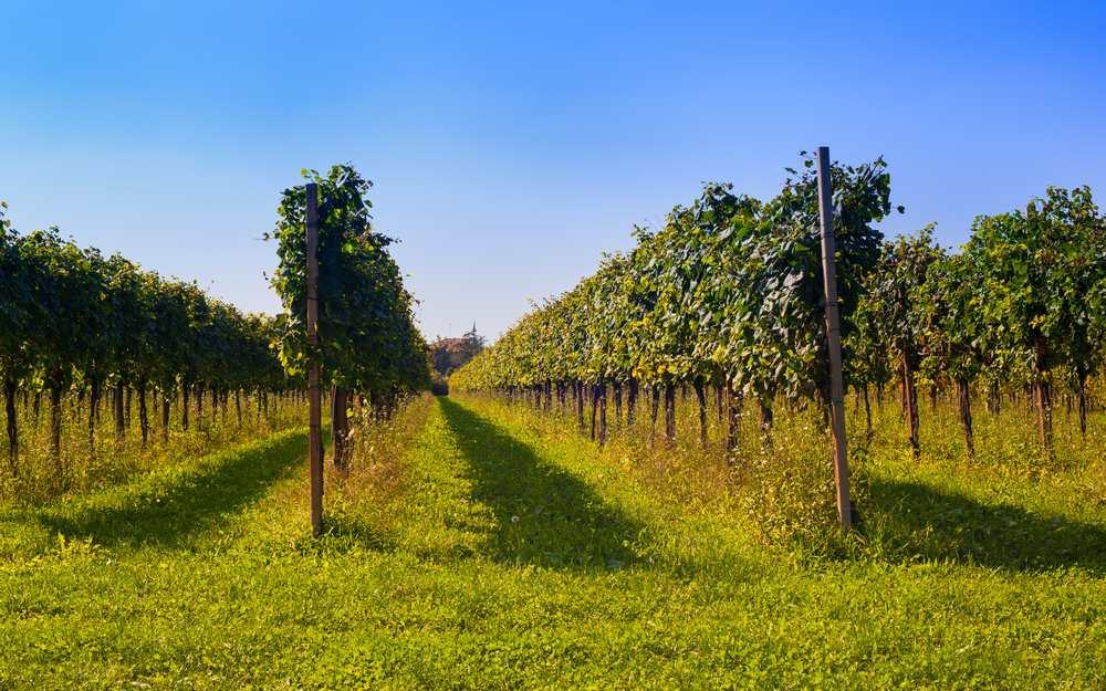 Italiaanse wijnen uit friuli venezia giulia for Progettazione giardini friuli venezia giulia