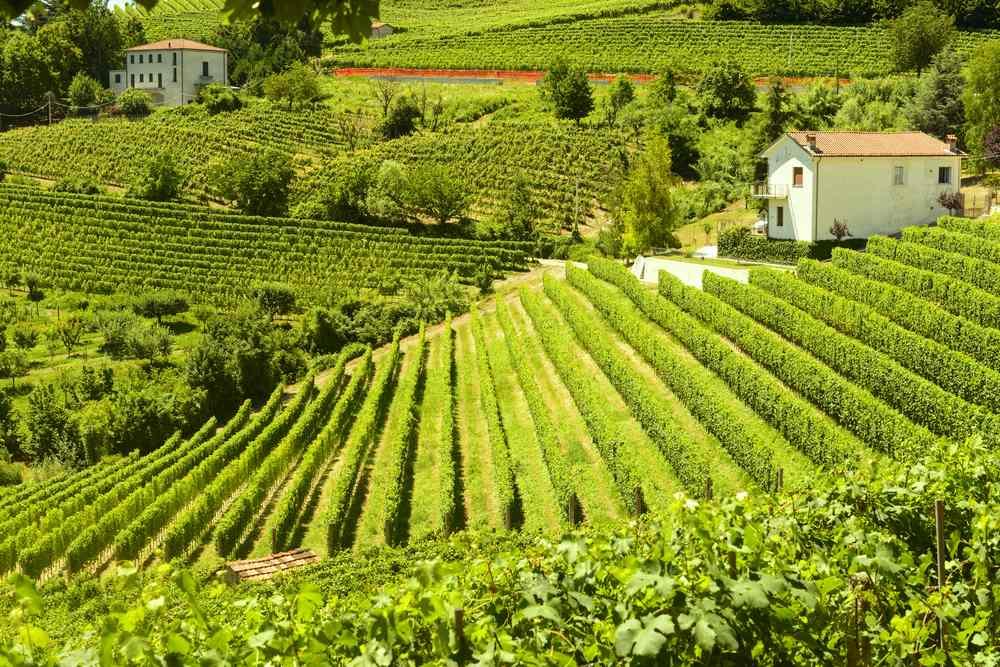 Italiaanse wijn - Piemonte