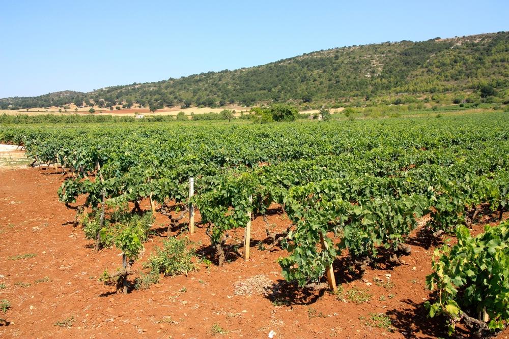 Italiaanse wijnen - Puglia