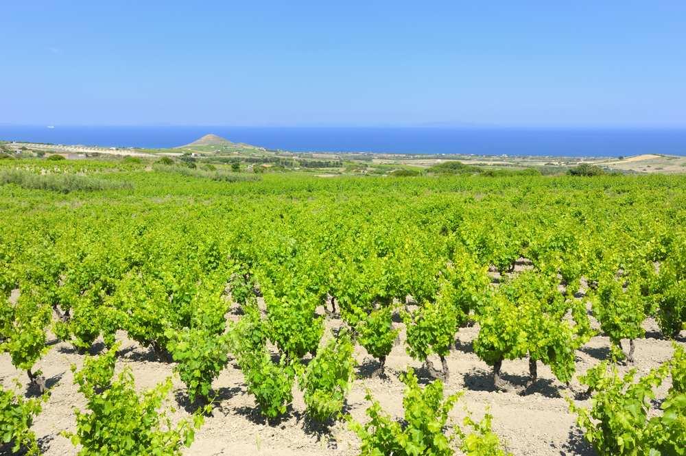 Italiaanse wijn - Sardegna