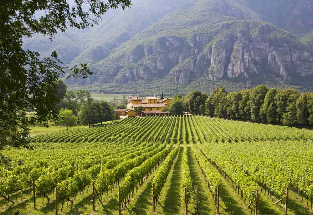 Italiaanse wijn - Trentino Alto-Adige