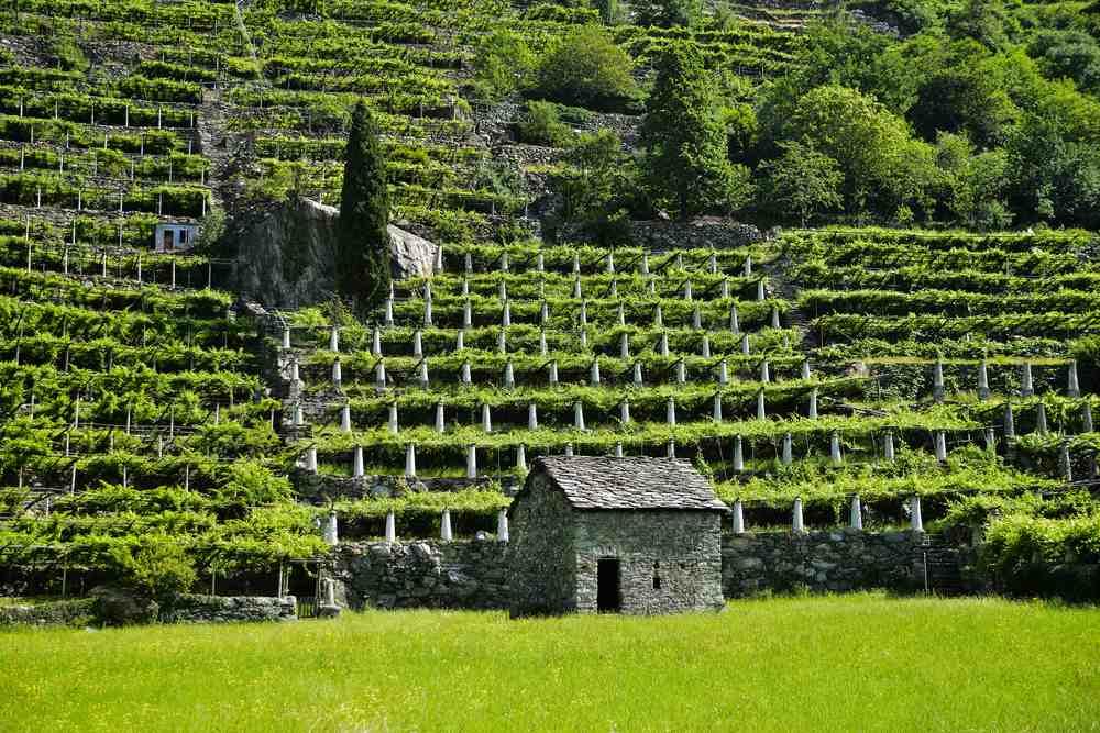 Italiaanse wijn - Valle d'Aosta