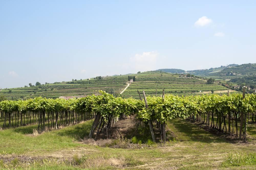 Italiaanse wijn - Veneto